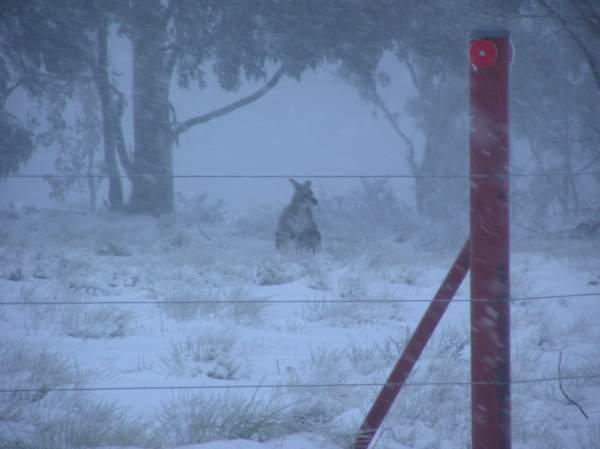 snow-canberra-australia-3.jpg
